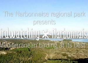 Bird Watching in Narbonnaise region
